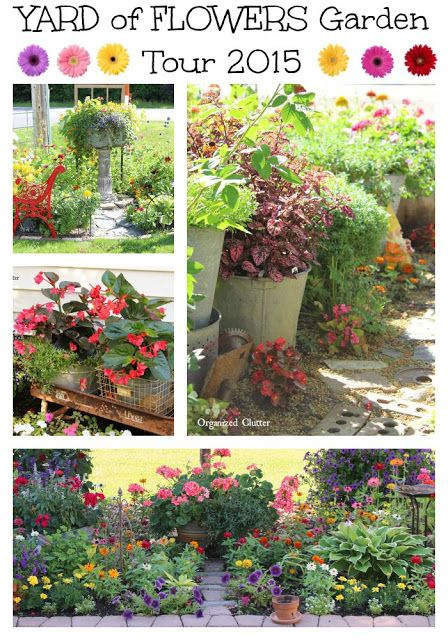 Best Garden Beauty Images On Pinterest Flower Gardening