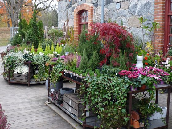 TRÄDGÅRDSMÄSTERIET PÅ STENINGE SLOTT   shape IT green   Plantskolan och trädgårdsbutiken på Trädgårdsmästeriet Steninge Slott ligger i en vacker stenlada från 1870-talet, tillsammans med restaurang, inrednings- och presentbutiker. De rustika stenväggarna ger en speciell stämning och ett vackert ljus. En riktig pärla bland plantskolor...