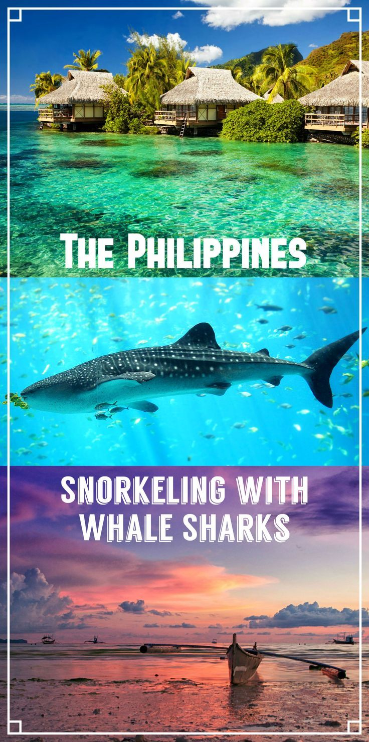 Snorkeling with Whale Sharks in the Philippines, three different spots; Oslob, Donsol and Legaspi. Best place to see whale sharks, tour operators, prices, tips, season.