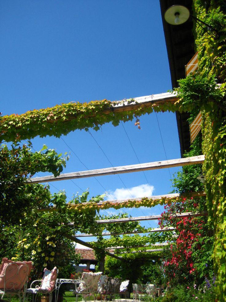 Il pergolato, con l'edera rampicante e piante di vite d'uva fragola