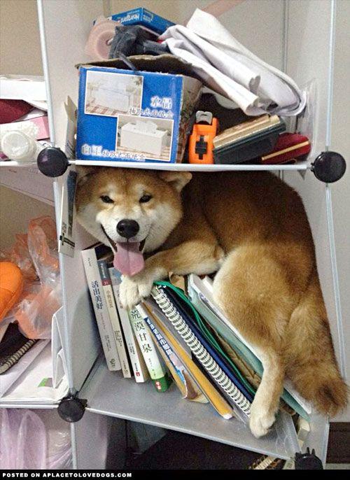 Dog. You are not a cat. You are a dog! Get out of there.