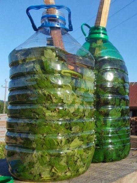 Haz tu propio fertilizante y pesticida natural