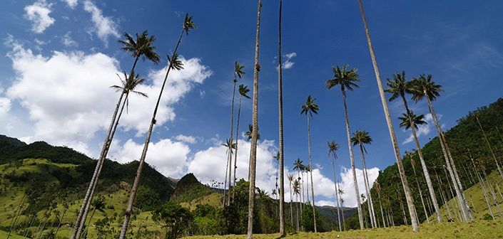 Cocora valley #colombia #travel