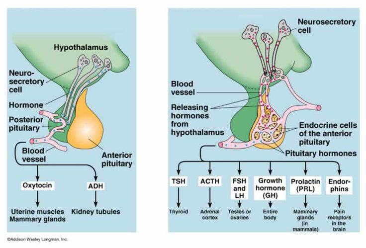 Anterior pituitary: As you can see by this chart it effects many areas of your body also including vision.
