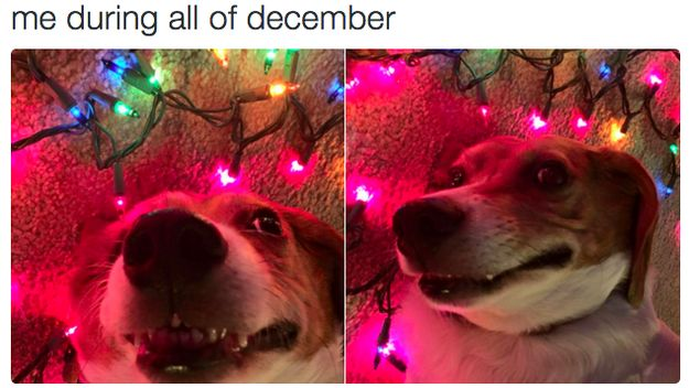 Because once it's December… | 25 Pictures That Are Too Real If You're Slightly Obsessed With Christmas