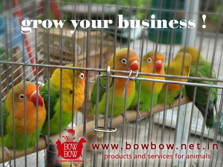 Plan your Business Growth with Bow Bow. Only marketplace of Products for animals in India! Visit Us @ www.bowbow.net.in  #makeinIndia #BOWBOW #sellonline #increaseyoursales #petlovers #animalindustry #animallove #petlove #Catlove  #AnimalLovers #Birds #petstore #petsupplies #petservices #petportal