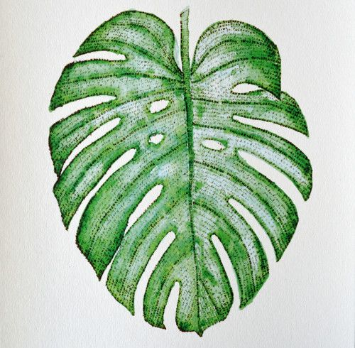 "Philodendron - ""2\"""