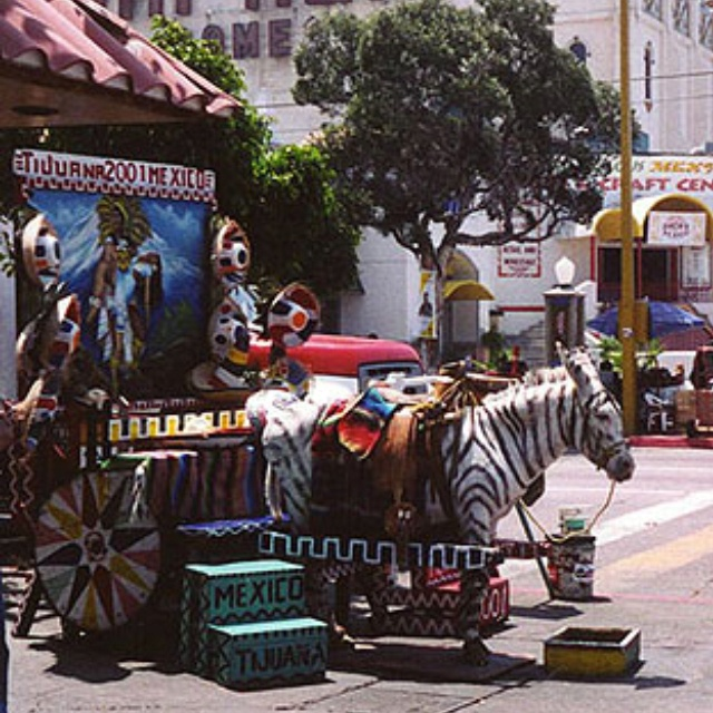 Tijuana - I will never forget the painted Burro that peeps were having their photo take beside. A Zebra =)