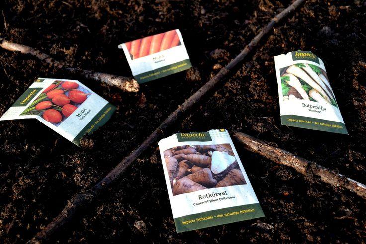 How to remember what I sowed? I take a picture! #garden #gardening #kitchengarden #growyourown #vegetables #trädgård #odla #köksträdgård #wintersowing