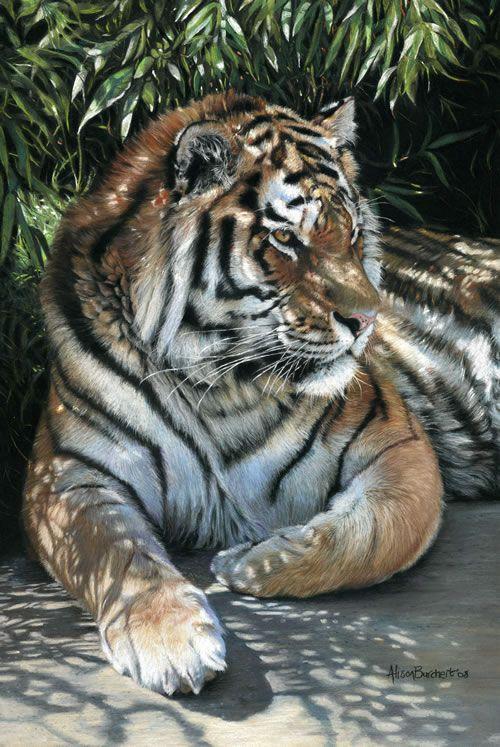 Tiger...Alison Burchert
