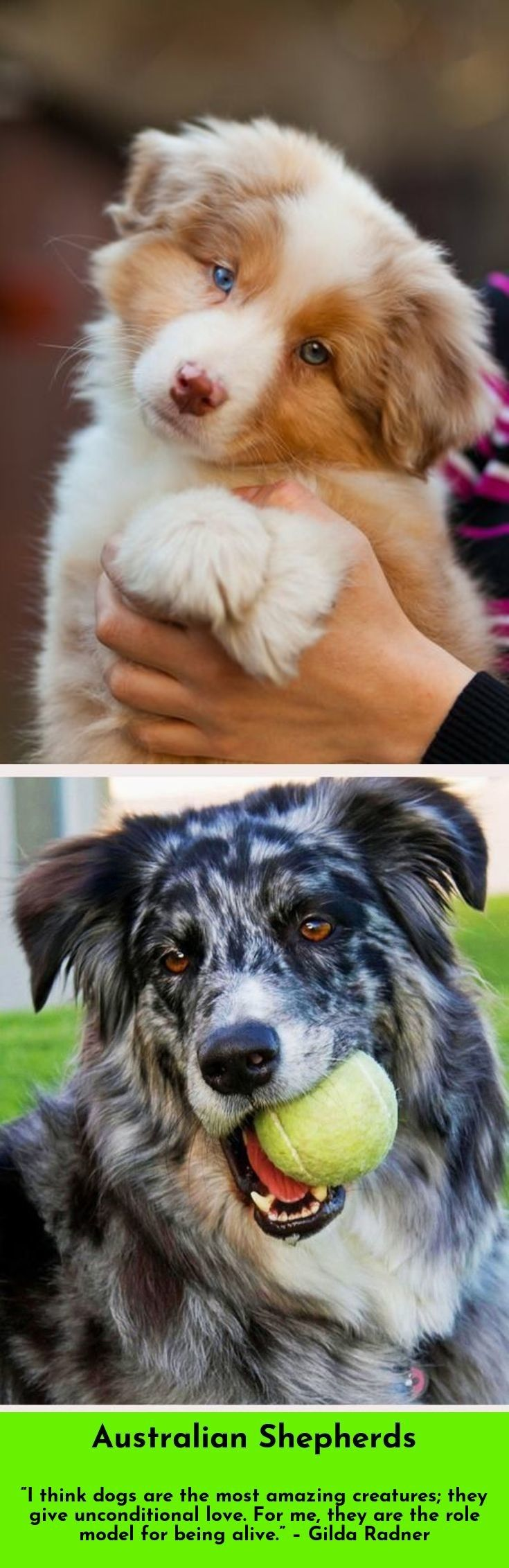 best chiens images on pinterest