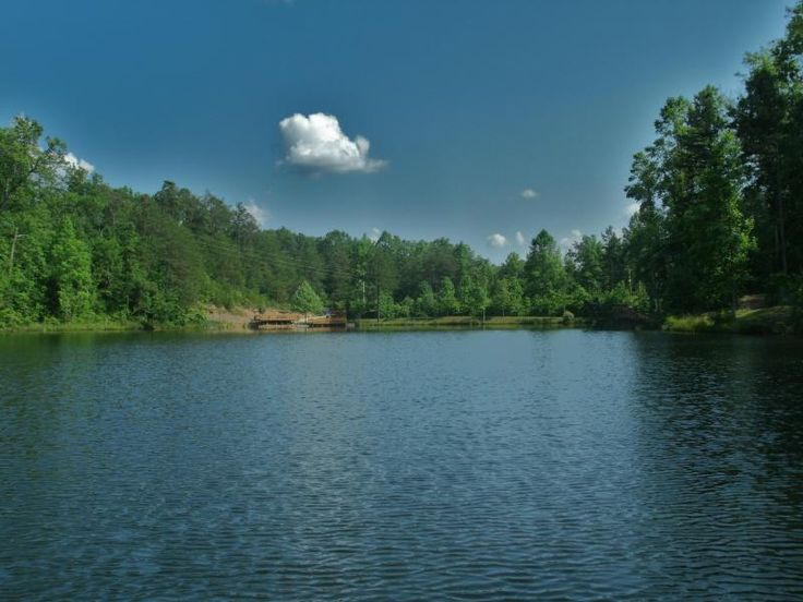 A Sneaky Bear's Hideaway - Brand New Luxury Lakeview Cabin ...   Bear Red River Gorge