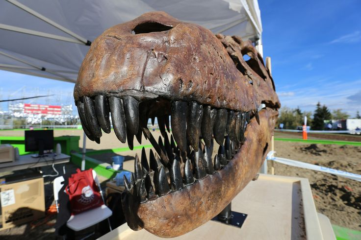 The Royal Tyrrell Museum is bringing the badlands to Beakerhead. Rub elbows with world-renowned dinosaur hunters to learn about prehistoric beasts.  Photo by Andre Goulet