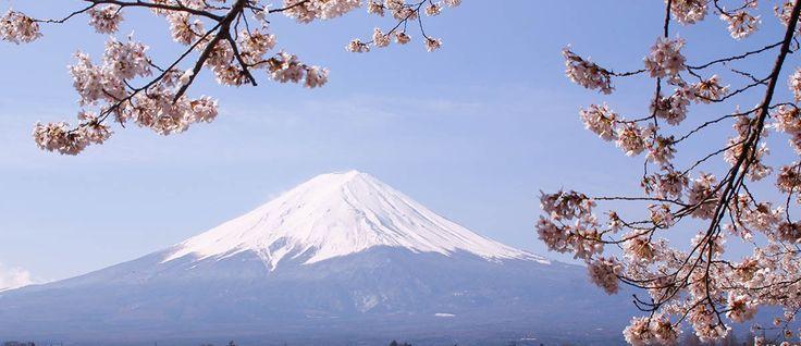 Abril en Japón, el mes del hanami – Japonismo