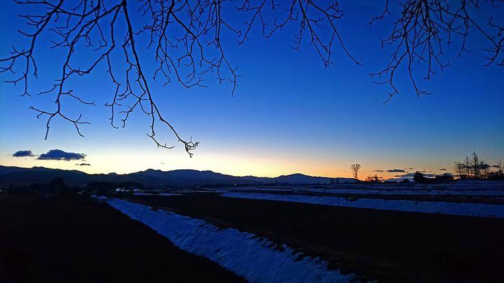 柿の木の枝と夜明け直前の風景
