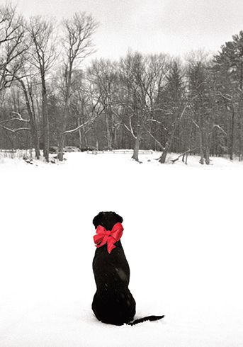 """Black Lab in Snow Christmas Card Set, from Dogstuff.com. Card depicts a black labrador with a big red bow around it's neck sitting in the snow gazing into the woods. Inside: """"Unleash the magic of the Season!"""", 10 cards with envelopes."""