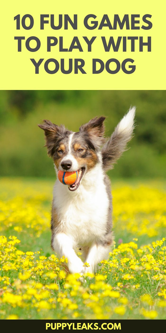 Looking for some fun ways to keep your dog active and busy? Here's 10 fun games to play with your dog.