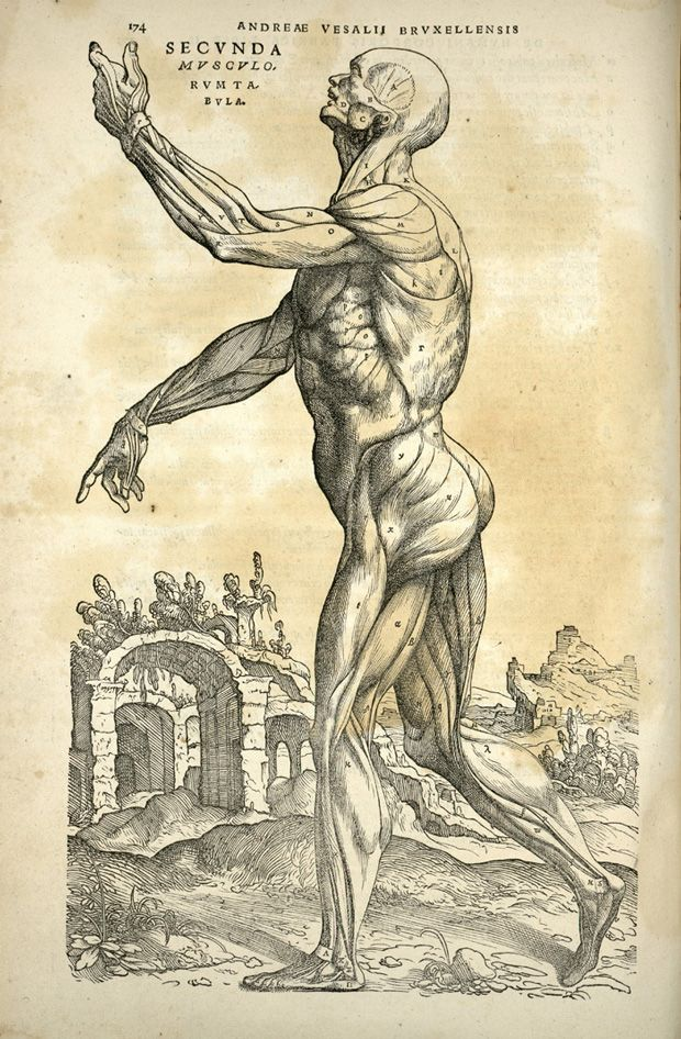 Human Body (Andreas Vesalius, 1543)    Vesalius's revolutionary anatomical treatise, De Humani Corporis Fabrica, shows the dissected body in unusually animated poses. These detailed diagrams are perhaps the most famous illustrations in all of medical history.