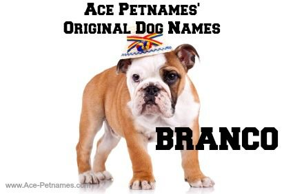 dog name ace
