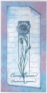 Cards, Cats and Coffee: Cornflower
