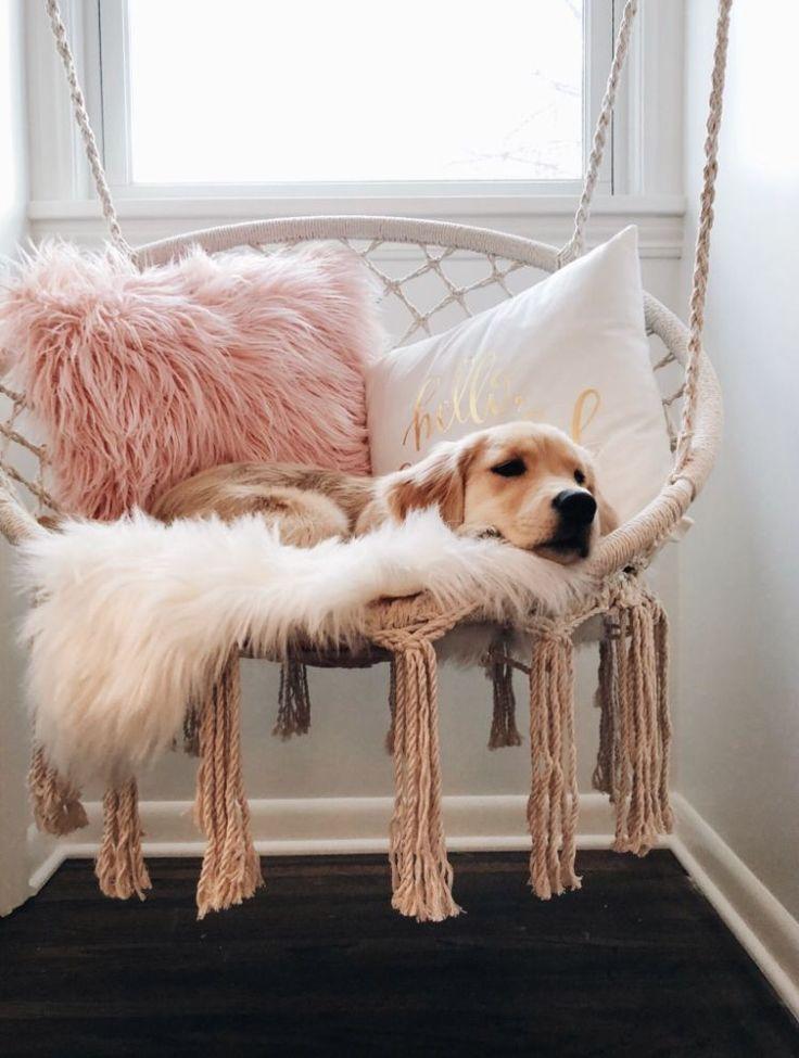 🧡 Netter Welpe 🐶 #DogPetPuppyIdeas | Schöne Hund, Haustier Ideen & Fotografie Sie …  – home – #amp #DogPetPuppyIdeas #Fotografie