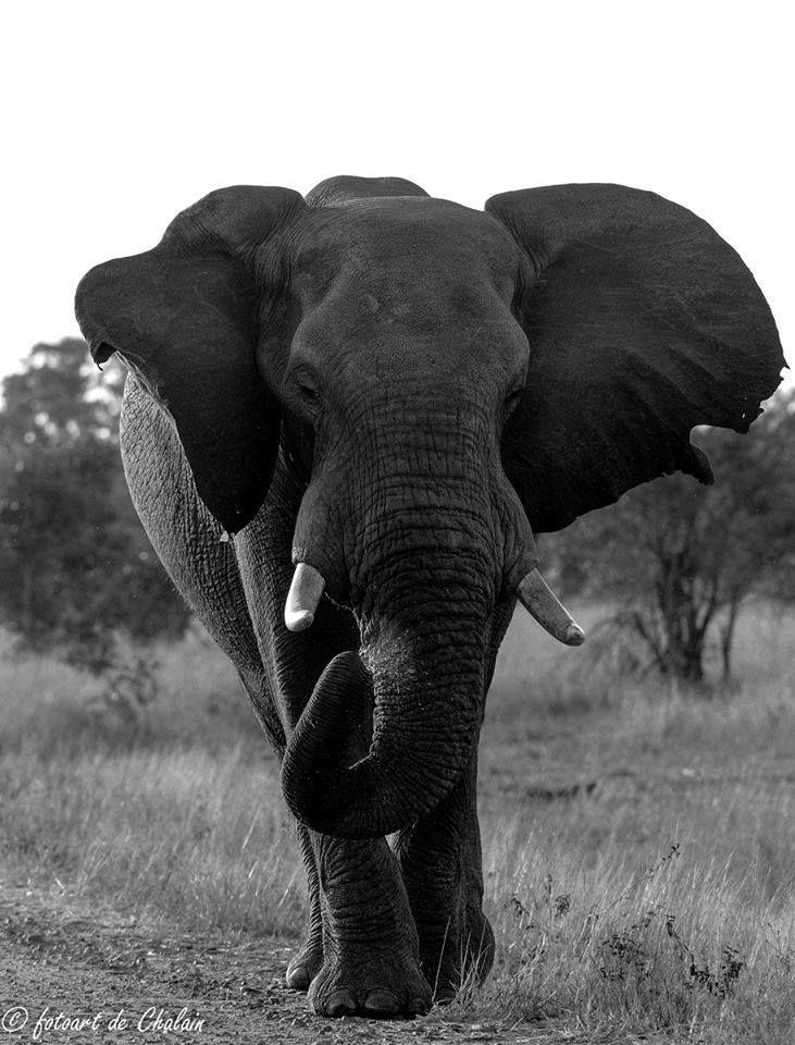 Kruger Park Top 10 Playful elephant