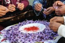 saffron co-operative morocco