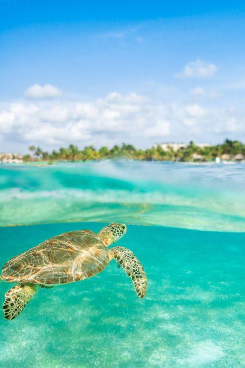 lsleofskye:  Tortuga in Paradise