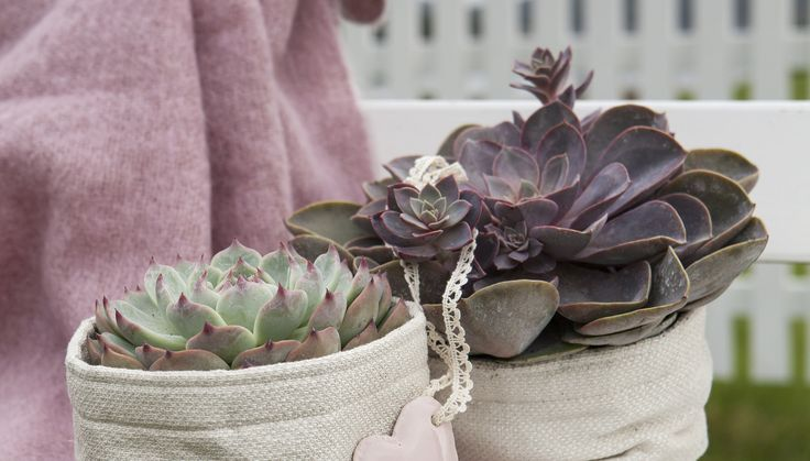 Sukkulenter er lettstelte, morsomme og dekorative planter som trives både ute og inne. De krever svært lite stell og passer perfekt for de som ønsker en lettstelt hage nå på sommeren.