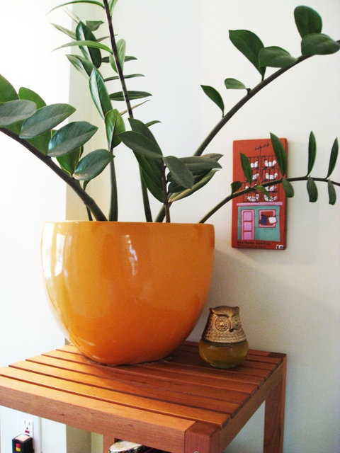 pleasurable low maintenance house plants. Low maintenance house plants for the horticulturally challenged  81 best indoor images on Pinterest House Indoor