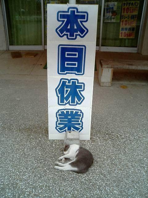 Tumblr: land-like-a-cat: via 猫てれびCats TV(@neko_tube1)さん | Twitter