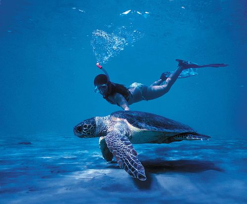 Scuba diving with a sea turtle