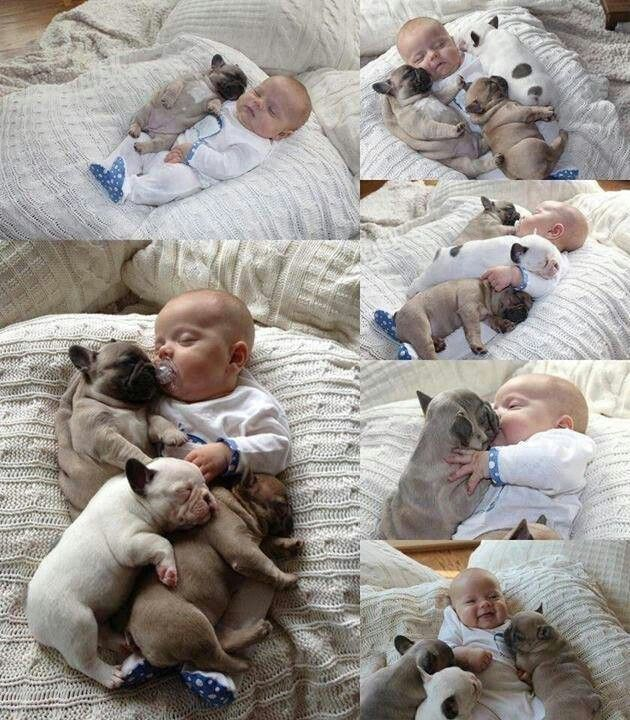 Omg so cute, baby and dogs