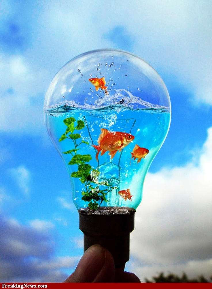 light bulb a cool picture created for a freaking news photoshop contest fish aquariums. Black Bedroom Furniture Sets. Home Design Ideas