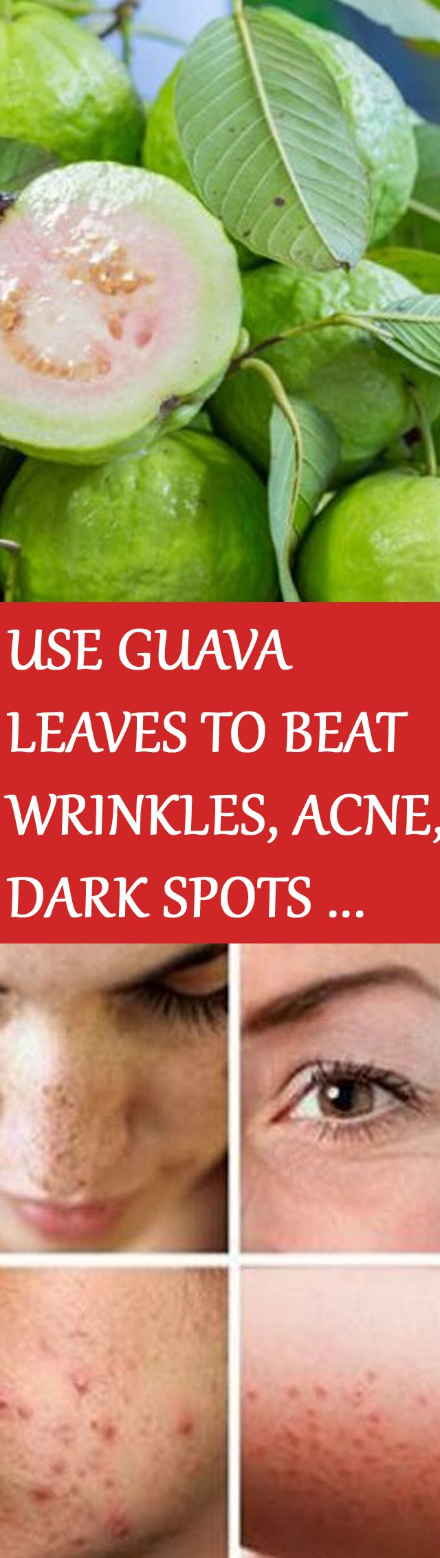 USE GUAVA LEAVES TO BEAT WRINKLES, ACNE, DARK SPOTS AND SKIN ALLERGIES For instructions click on the picture :D