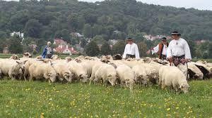 http://stadoowiec.pl/wypas-owiec/