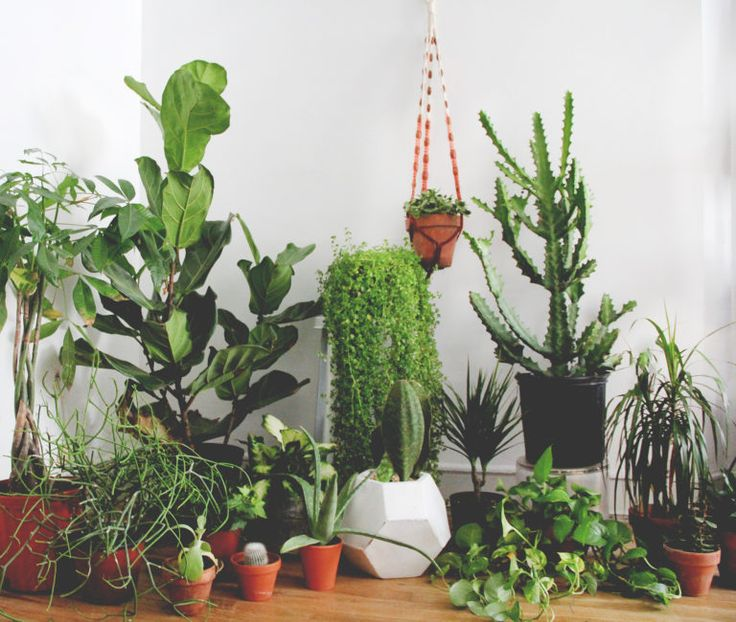 Here's how to keep your houseplants alive