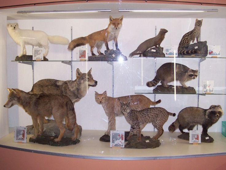 Museo Naturalistico di Corleto Monforte -