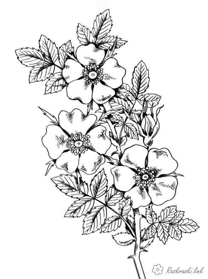 Coloring Trees Rosehip, branch, flowers   Coloriage
