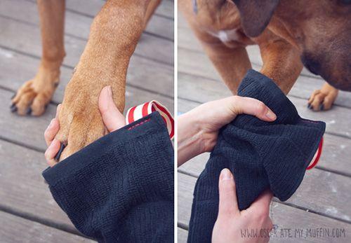 Dog I Y: Easy DIY Mud Puppy Mittens in other grooming hygiene doggiy