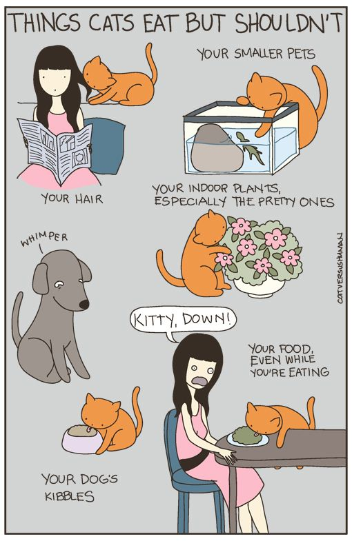 Things cats eat but shouldn't
