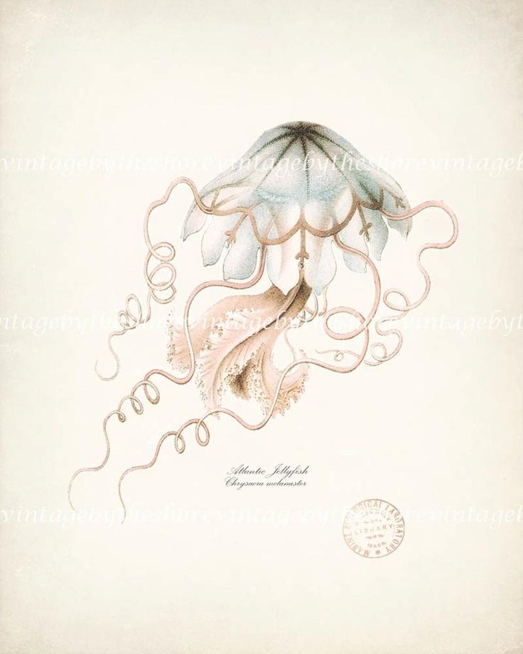 Vintage jellyfish illustration - photo#4