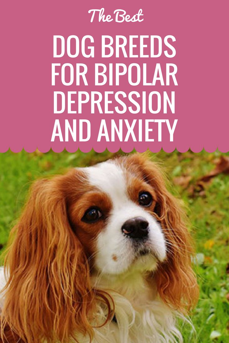 These are just some of the dog breeds that help symptoms of bipolar disorder and anxiety.