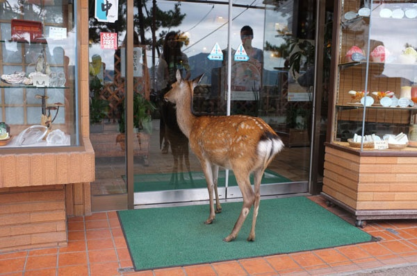 Excuse me, do yall have a public restroom?The Doors, Funny Dogs, Funny Animal Pictures, Dear Deer, Funny Pictures, Funny Stuff, Funny Photos, Animal Photos, Funny Memes