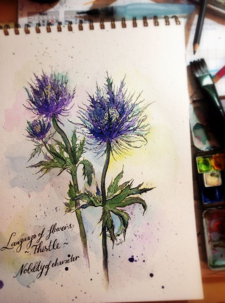stylized watercolor of a thistle