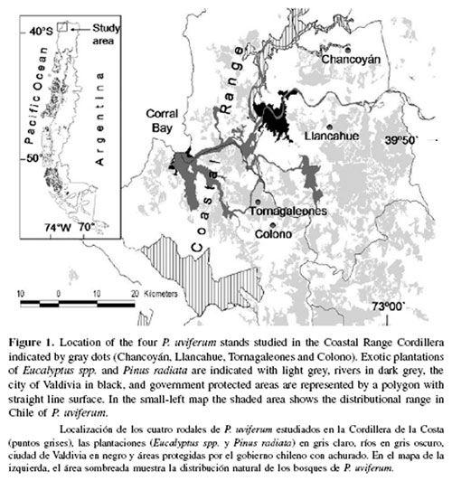 Precarious conservation status of Pilgerodendron uviferum