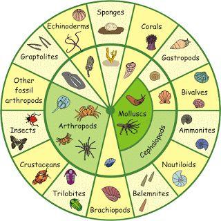 Subhan's Blog: Beberapa Klasifikasi Ilmiah Invertebrata