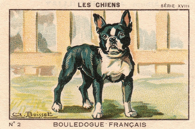 french bulldog 1933-34 (click for over 160 images)