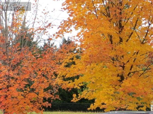 Beautiful fall colours in Niagara