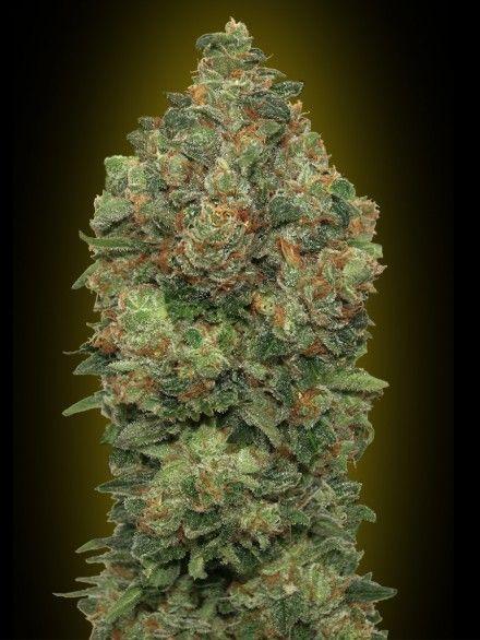 Top 7 Cannabis Strains-Natural Depression Remedy